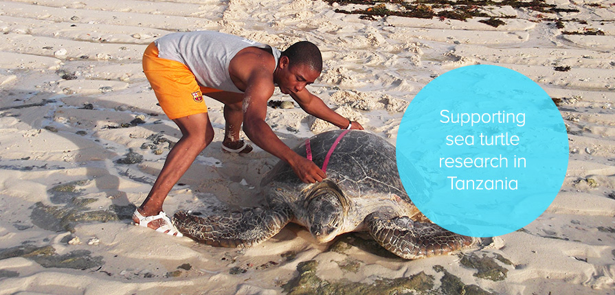 Supporting sea turtle research in Tanzania