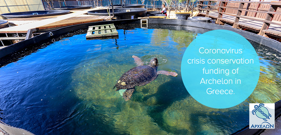 Coronavirus crisis conservation funding of Archelon in Greece